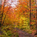 Paysage aux couleurs de l'automne
