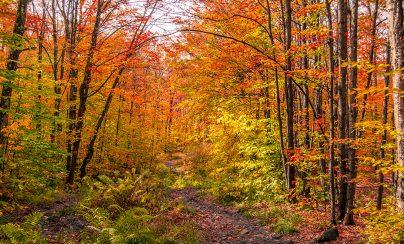 TOP 10 : les meilleurs endroits pour admirer les couleurs de l'automne