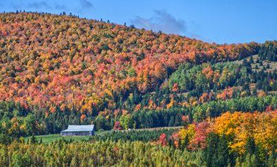 À la chasse aux couleurs de l'automne